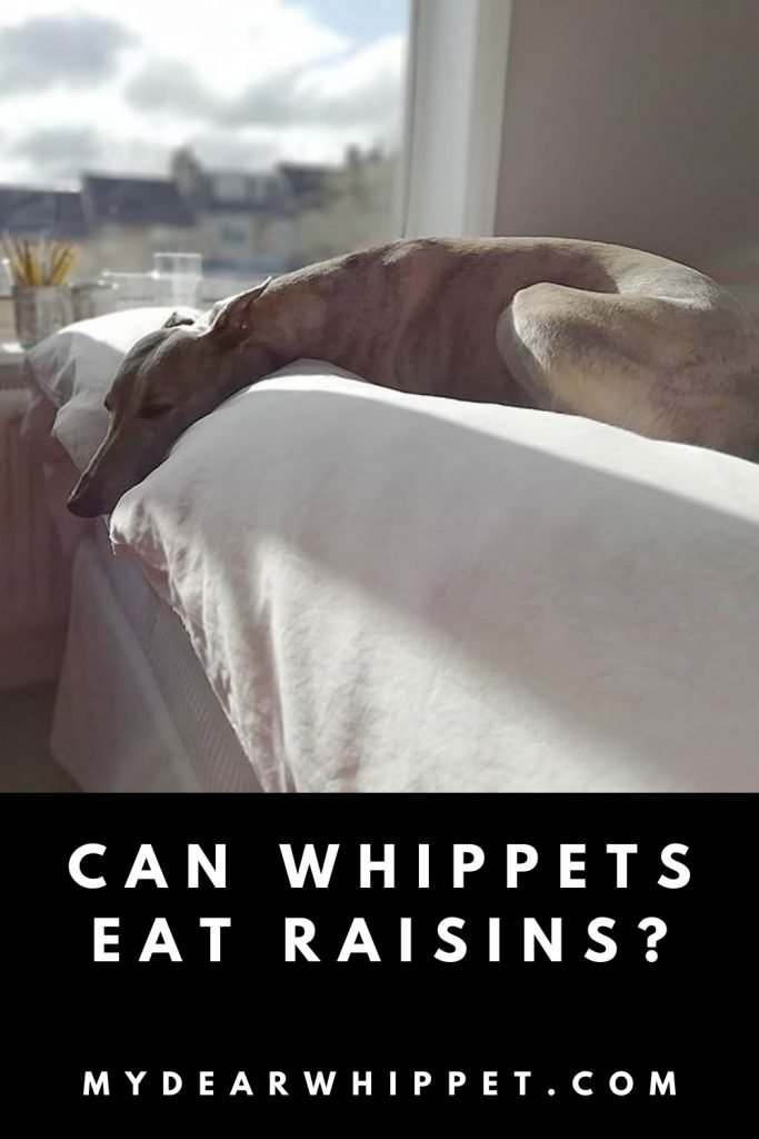 Whippets and Raisins