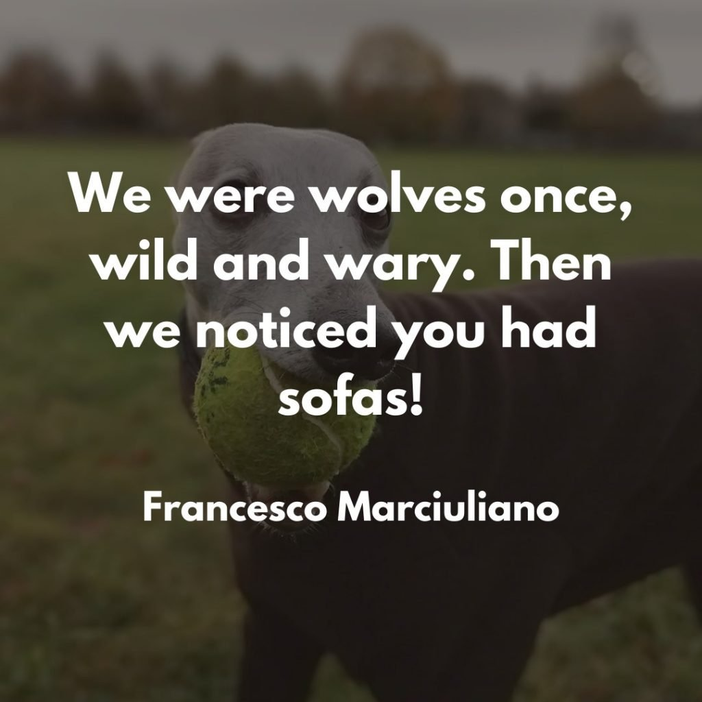 Francesco Marciuliano Dog Quote