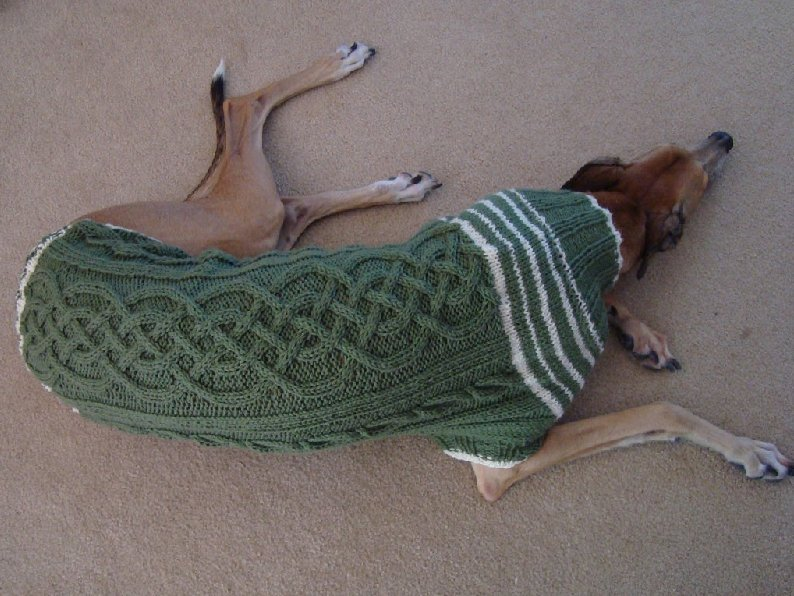 Chic Chick Boutique Whippet Jumper
