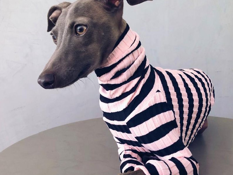 Oh My Floki! Striped Whippet Sweaters