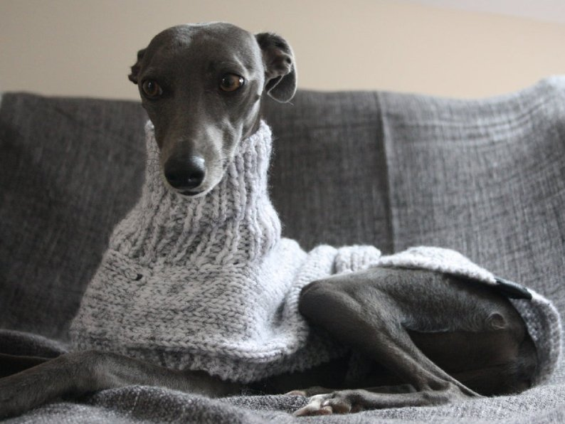 The Trendy Whippet Winter Sweater