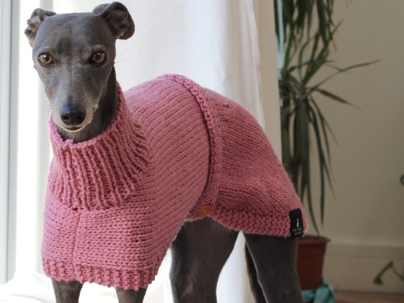 The Trendy Whippet Warm Sweaters