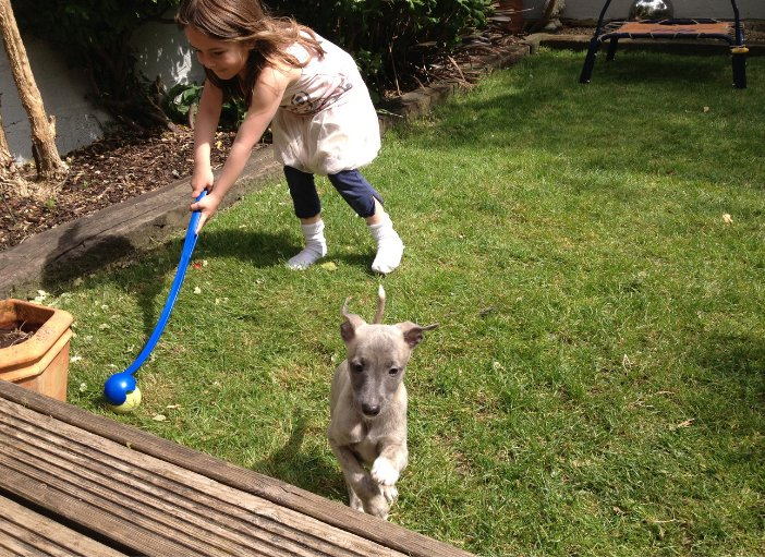 How Much Exercise Does a Whippet Puppy Need?