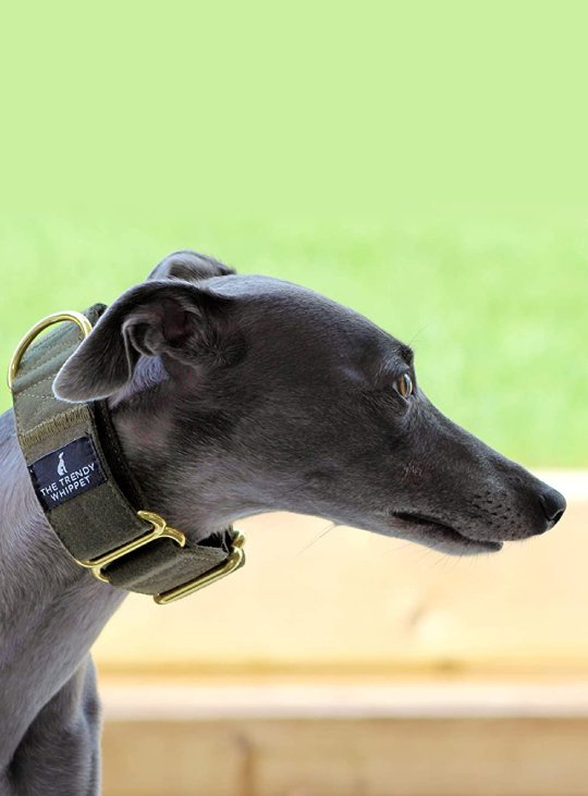 Green Martingale Whippet Collar