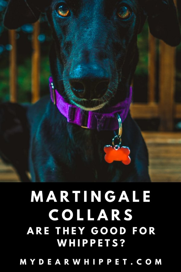 Martingale Collars for Whippets