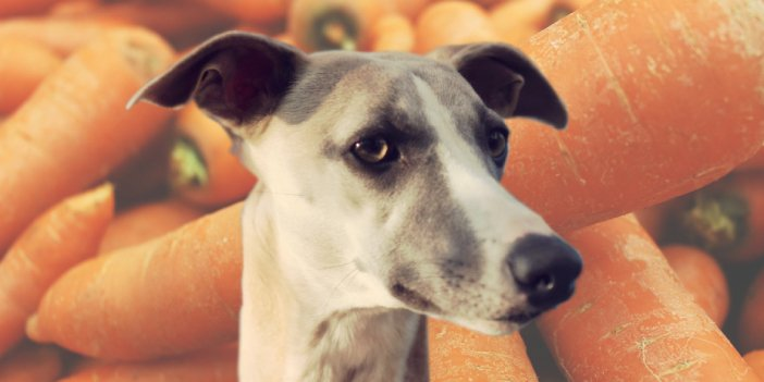 Are Carrots Good for Dogs?