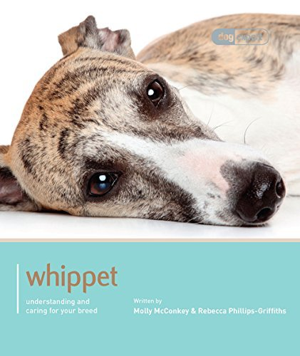 Whippet - Dog Expert by Molly Mcconkey & Rebecca Phillips-Griffiths