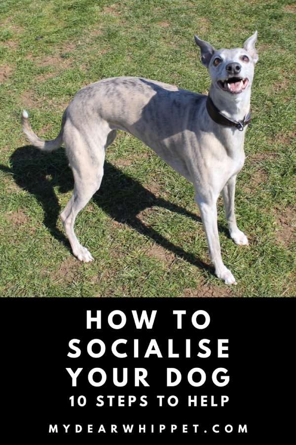 How to Socialise Dogs