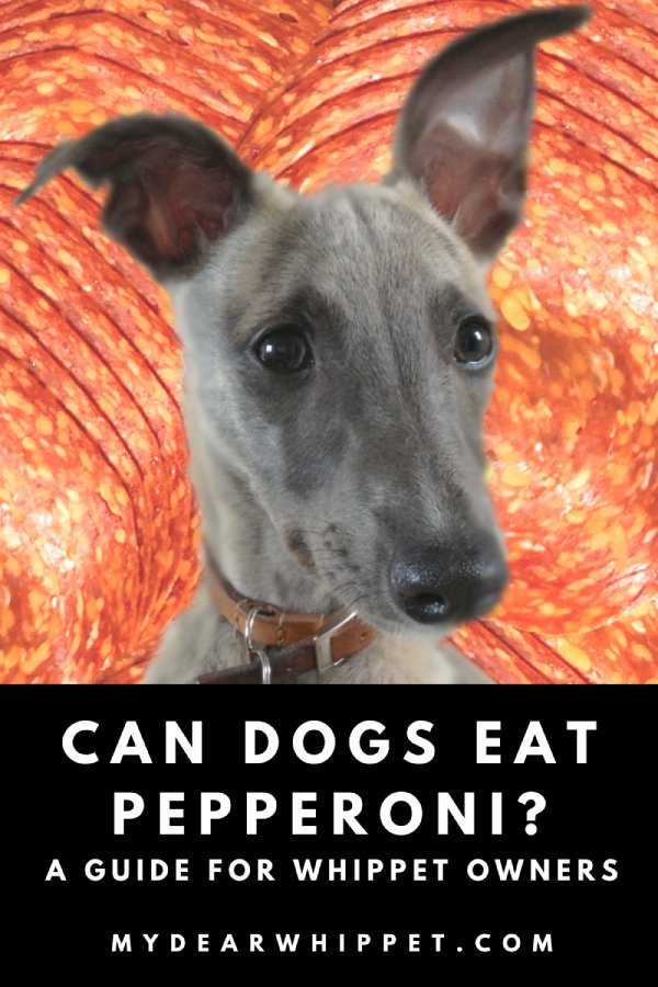 Pepperoni... Should You Let Your Whippet Eat It?