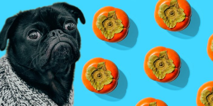 Can Dogs Eat Persimmon?