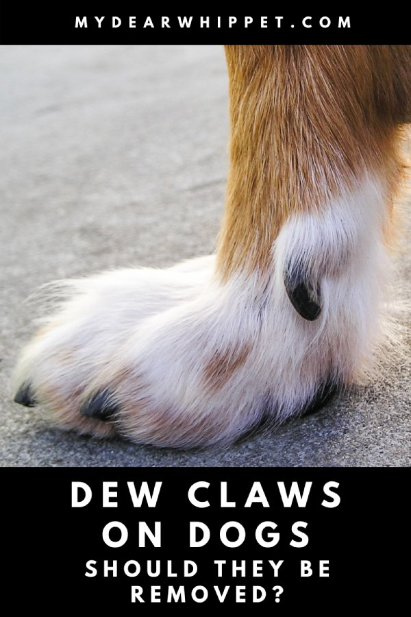 Should Dew Claws be Removed?