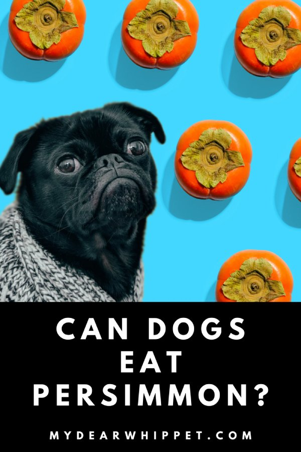 Is Persimmon Good for Dogs?
