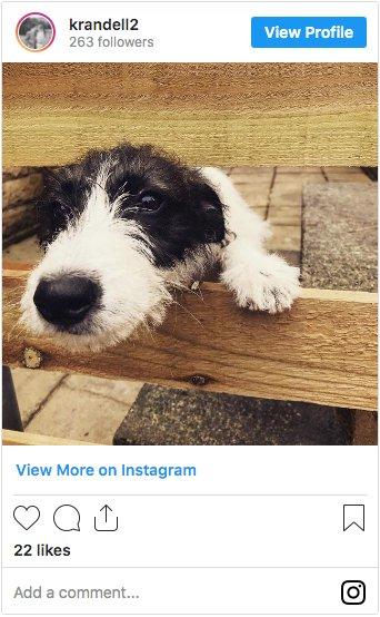 @krandell2 Whippet Jack Russell Cross on Instagram
