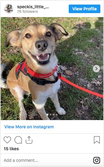 @speckis_little_world Whippet Jack Russell Mix on Instagram