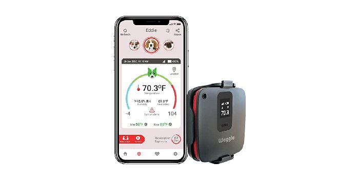 Dog Safety Temperature & Humidity Sensor by Waggle - Expensive Dog Accessories