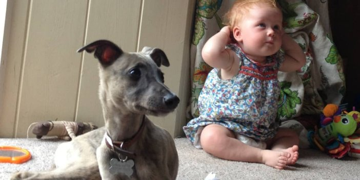 Are Whippets Goof Family Dogs?
