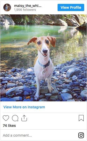 @maisy_the_whiphund on Instagram