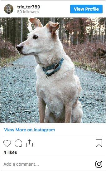 @trix_ter789 Whiphund on Instagram