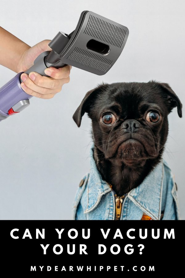 Can you use a vacuum on a dog?