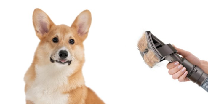 11 Vacuum Attachments for Dog Grooming