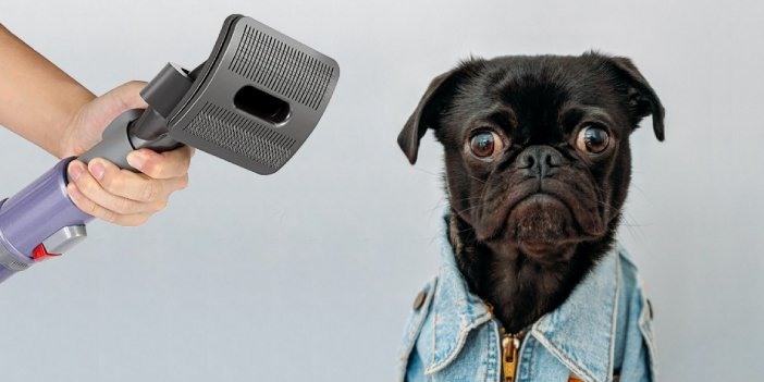 Is it ok to vacuum your dog?