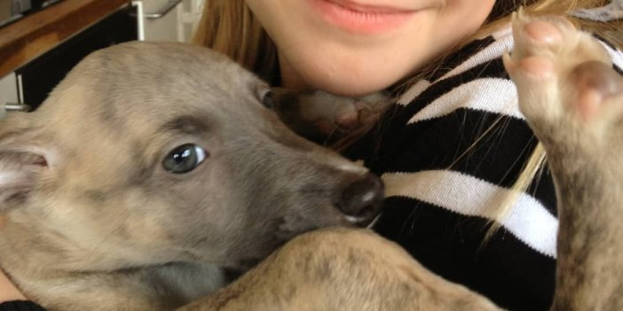 Are Whippets Affectionate?
