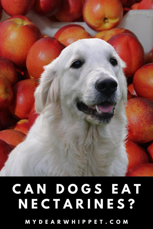Are Nectarines Good For Dogs?